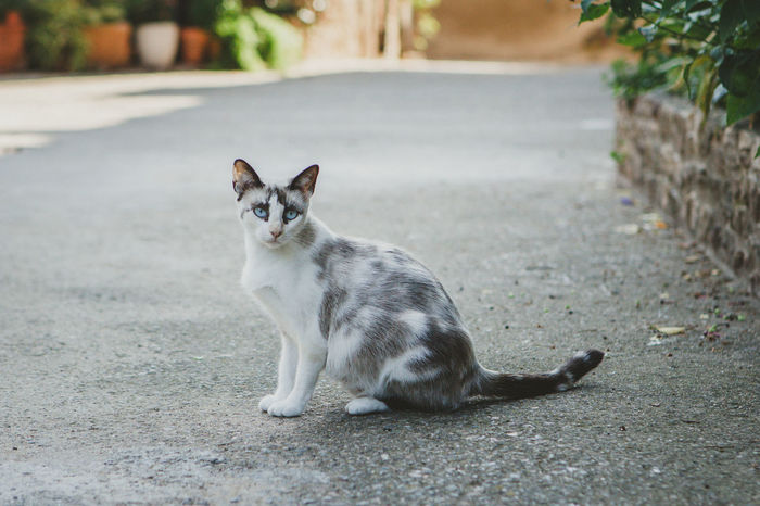 Cat City Day Domestic Domestic Animals Domestic Cat Feline Focus On Foreground Full Length Looking Mammal No People One Animal Pets Portrait Sitting Vertebrate Whisker