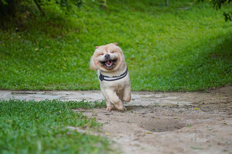 Portrait of dog running on field