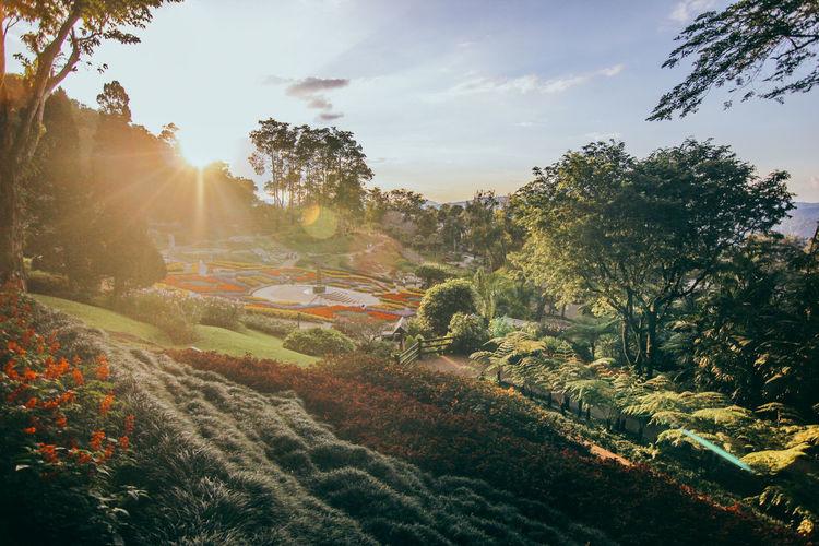 โครงการหลวง ดอยคำ Chiang Rai, Thailand Flowering Plant Green Color National Park Nature Nature Photography Sunset_collection Thailand Beauty In Nature Day Flower Good Vibes Growth Nature No People Outdoors Plant Sunset Travel Thailand ดอยคำ เชียงราย โครงการหลวง EyeEmNewHere