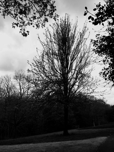 Trees TreePorn More Growth Leaves Leaves And Sky Leaves And Branches Second Pic Blackandwhite Photography Black & White April Daily Life Dog Walking More Leaves