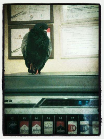 an urban bird