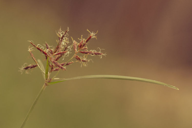 Alone Calming Green Nature Plant Tranquility Brown And Green Focus On Foreground Independent  Singular Weed