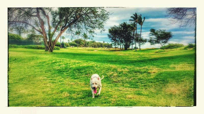 LiVe,Laugh,LoVe*~* The Great Outdoors With Adobe Happiness A Beautiful Day Love My Bull Pitbull Lover