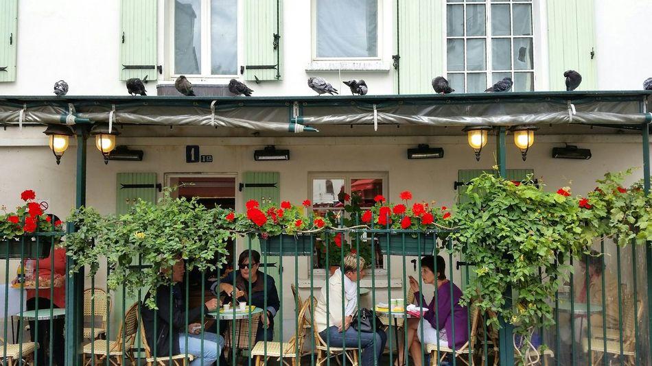 Paris ❤ Beautiful Place Place Du Tertre Restaurant