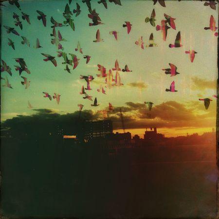 sunset flock