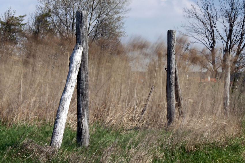 ND Filter Reedy Countryside Fence Long Exposure Paling Reed Wind