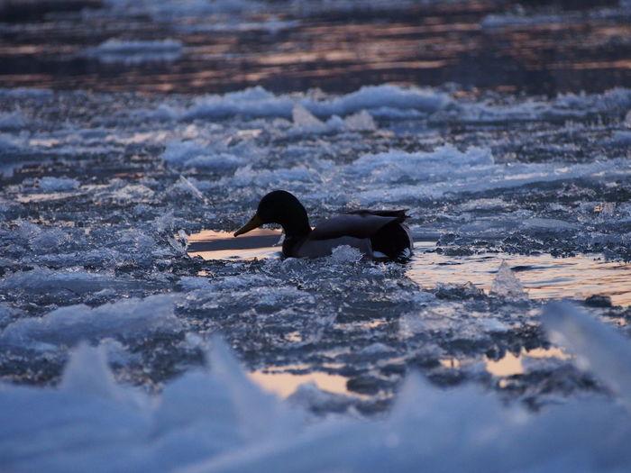 Bird perching on stream during winter