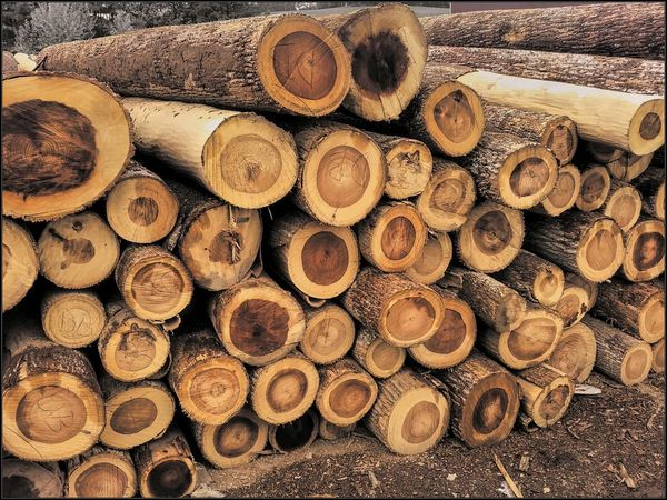 Life of production.... Nature Productionlife Tree_collection  Lumber Industry Lumberyard Lumber Mill Wood Logs Logging Log Pile Logs Lumber