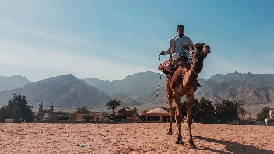 Man riding camel on sand against sky