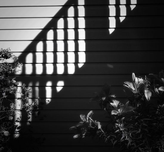 Shadow Blinds Sunlight No People Tree Architecture Built Structure Day Building Exterior Outdoors Flower Stairs Staircase Architecture Shadow black and white Black And White Monochrome Strong Shadow Cast Porch Home Decor Rethink Things The Graphic City