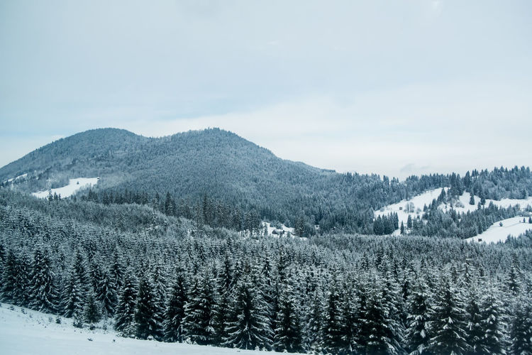 Landscape of mountains and forest during winter in romania heavy snow