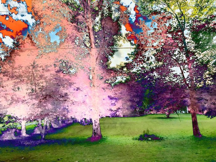 Pink Filter Plant Tree Grass Growth Nature Day No People Park Outdoors Multi Colored Environment Green Color Beauty In Nature