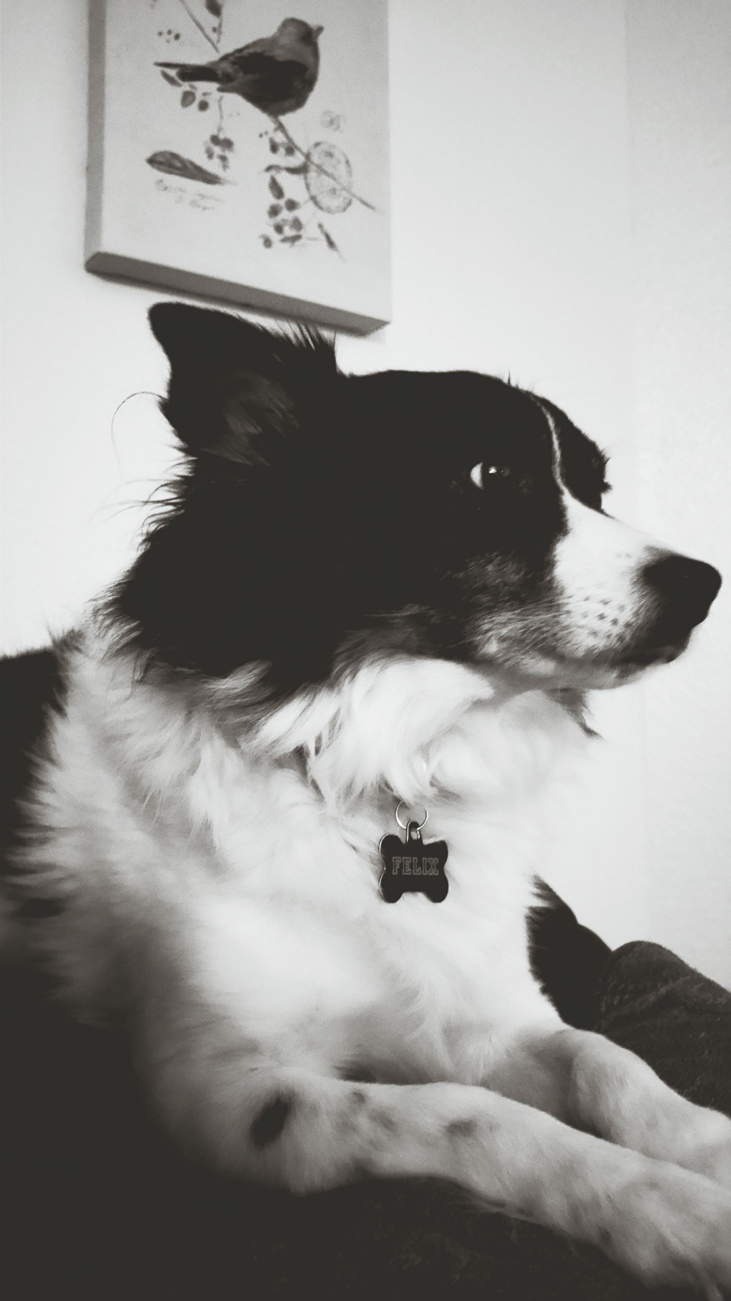 pets, domestic animals, one animal, mammal, animal themes, dog, indoors, lifestyles, black color, leisure activity, men, home interior, unrecognizable person, white color, side view, high angle view, communication, sitting