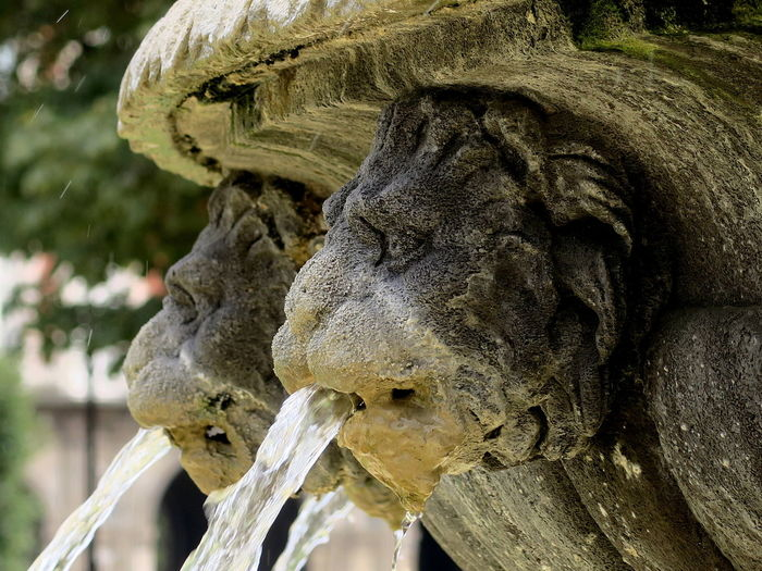 Close-up of stone lions