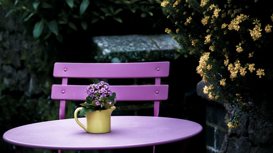 Yellow Punch Plant No People Nature Flower Table Flowering Plant Pink Color Growth Day Outdoors Seat Focus On Foreground Freshness Tree Front Or Back Yard Close-up Vase Architecture Chair Built Structure Purple