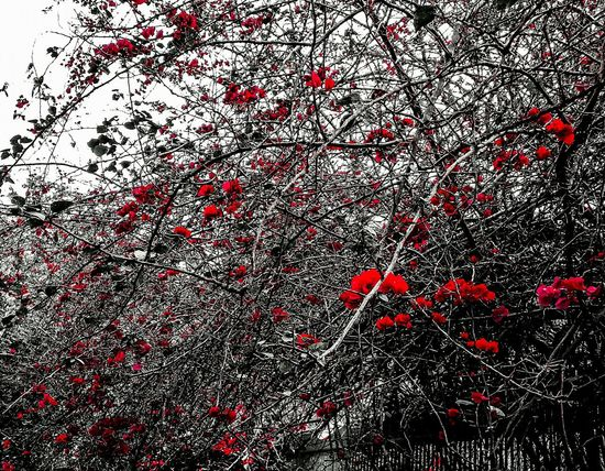 cerca VIVA... Red J7primephotography Rio De Janeiro Brazil EyeEmNewHere Bw Pb Céu Ink Backgrounds Red Full Frame Abstract Textured  Close-up