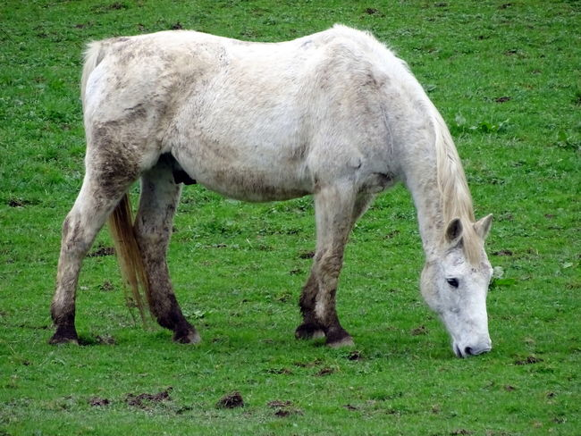 Animal Themes Day Domestic Animals Field Foal Full Length Grass Grazing Green Color Horse Livestock Mammal Nature No People Outdoors Standing