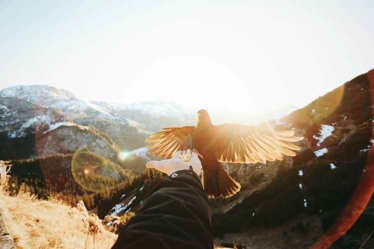 Cropped image of hand feeding bird on mountain