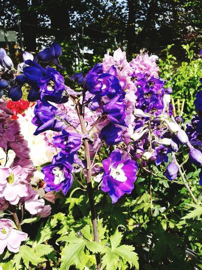 Italy Flower Tree Branch Springtime Flower Head Purple Leaf Blossom Close-up Plant Iris - Plant Petunia Plant Life Pollen Petal Bougainvillea Hibiscus Cosmos Flower Botany