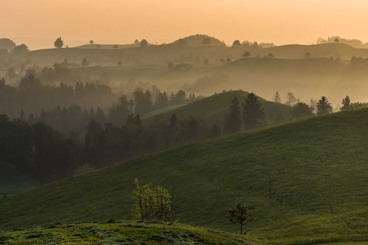 Early morning session on Swiss countryside. Hills Nature Trees Beauty In Nature Countryside Early Morning Fog Grassland Idyllic Landscape Mist Misty Morning Nature No People Outdoors Sky Spring Sunrise Tranquil Scene Tranquility Capture Tomorrow