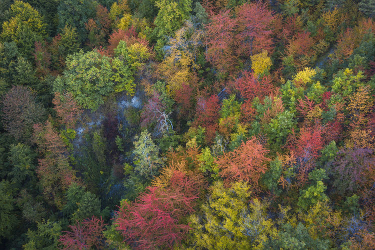 Aerial vew of a multi colored forest in a autumn day. Autumn Colors Drone  Drone Shot Drooling EyeEmNewHere Madness Morning Romania Aerial Aerial Photography Aerial View Beauty In Nature Color Day Drone Photography Fall Lake Land Multi Colored Nature No People Outdoors Plant Tree