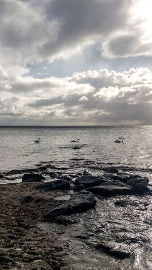 Baltic Sea Animal Themes Beach Beauty In Nature Bird Cloud - Sky Day Horizon Over Water Nature No People Outdoors Scenics Sea Sky Stones Sunlight Sunset Swan Tranquil Scene Tranquility Water