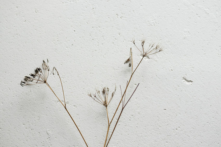 Seeds Day Flower Minimalism Nature No People Outdoors Plant