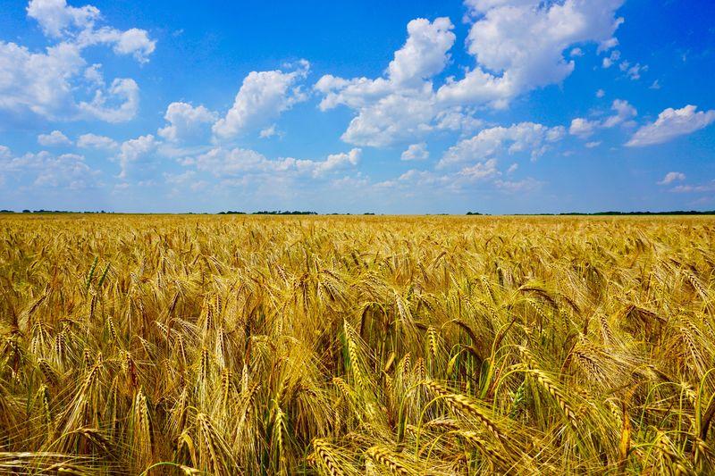 Goldenes Feld