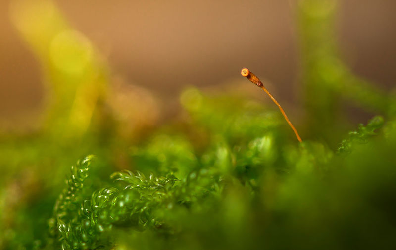 hermit Hermit Light Beauty In Nature Close-up Day Forest Fragility Freshness Green Color Growth Moss Nature No People Outdoors Plant Selective Focus Yellow