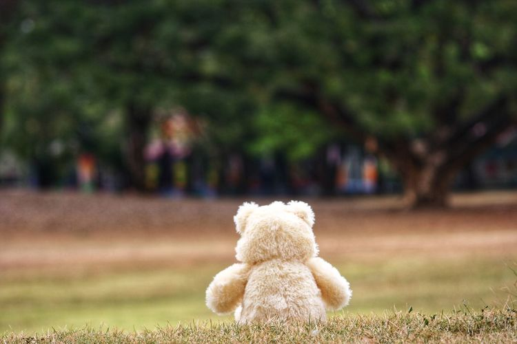 Close-up of stuffed toy in park