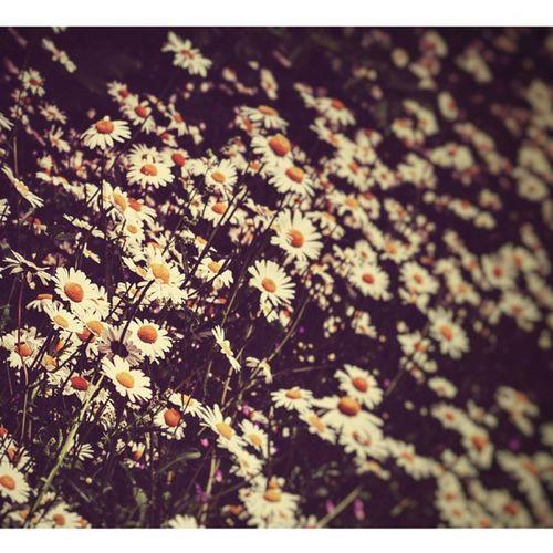 Mylove4flowers