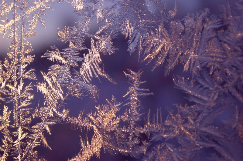 Winter magic and beauty frozen on the window. The revival of the winter fairy tale. Abstract Backgrounds Beauty In Nature Branch Close-up Cold Temperature Day Frosted Glass Frozen Full Frame Ice Crystal Nature No People Outdoors Snow Snowflake Tree Winter