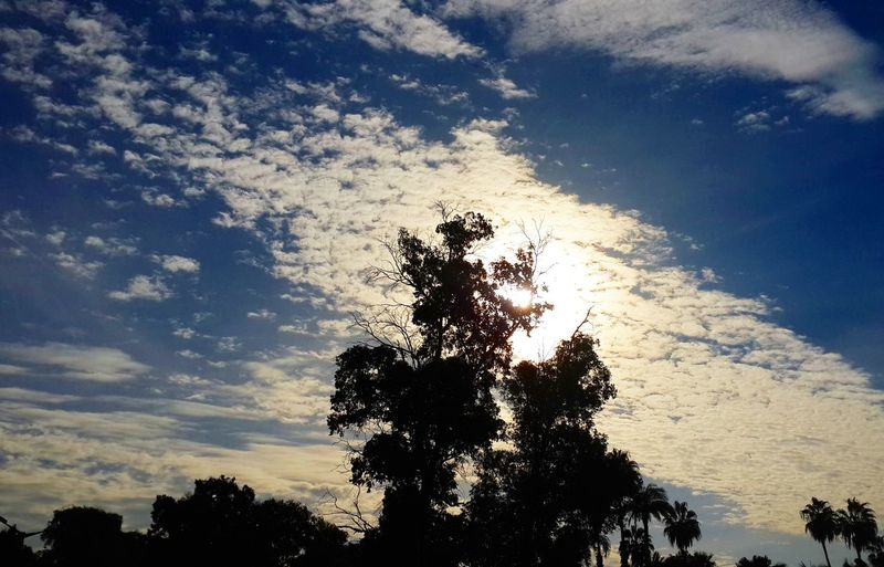 First Eyeem Photo Tree And Sky Sunlight Positivity Warm Light Nature Nature_collection