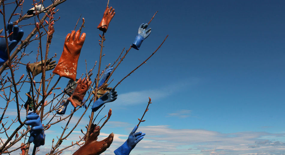 Low angle view of protective gloves stuck on bare trees against blue sky