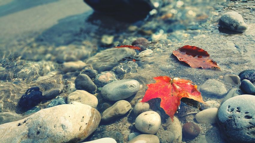 EyeEm Selects Beach Sand Pebble Nature No People Day Water Close-up Beauty In Nature Leaves 🍁 Leaf Nature Freshness Autumn Lake Lake Michigan