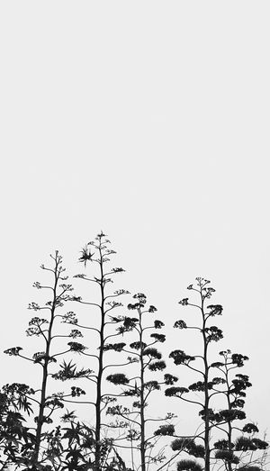 Up to the air Blackandwhite Nature_collection