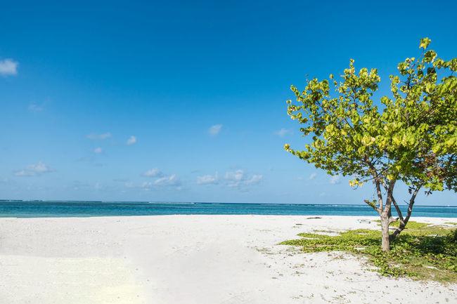 Beach Beauty In Nature Blue Freedom Happy Happy Time Horizon Over Water Landscape Maafushi Maafushi Island Maldives Nature Sand Sea Sea And Sky Seascape Sky Summer Suumer  Tourism Travel Tree Water
