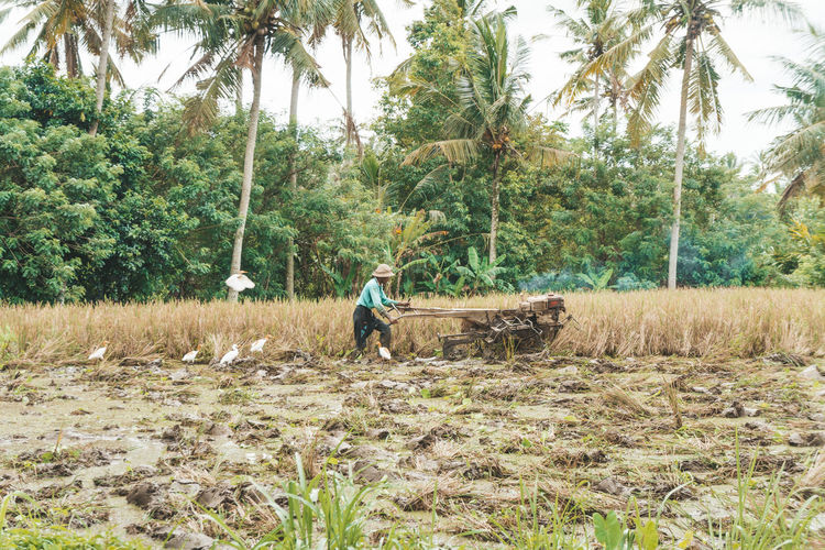 Tree Plant One Person Men Nature Real People Day Land Outdoors Rice Field Working Travel Moments Working Hard Countryside Countryside Life Bali Astronomy