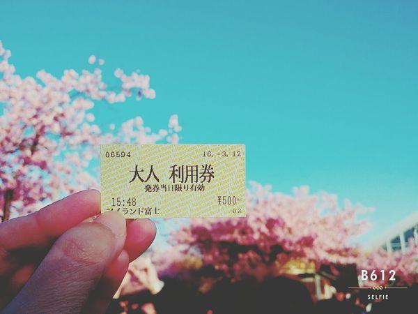 Japan Good Memory Sakura