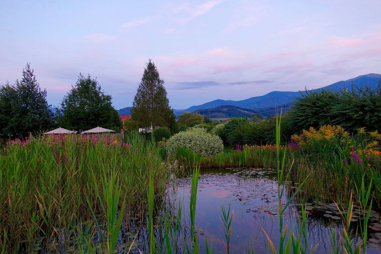 A bio pond at sun set in Fisching, Austria. Austria Beauty In Nature Bio Pond Cloud Cloud - Sky Countryside Fisching Grass Hill Idyllic Landscape Mountain Mountain Range Nature No People Non Urban Scene Non-urban Scene Outdoors Plant Sky Sun Set Tranquil Scene Tranquility Tree Water