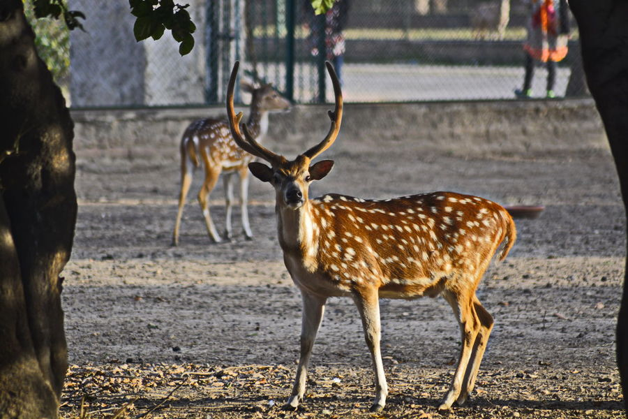 Animal Themes Animals In The Wild Deer Lovelynatureshots Outdoors Safari Animals Spotted Standing Wild Life Wildlife