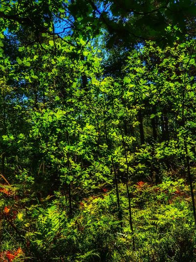 Backgrounds Tree Full Frame Close-up Green Color Green Greenery Young Plant Blossoming  Leaves Growing