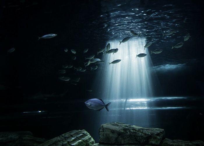 Sealifeaquarium Sydney Traveling Travel Photography Lights Aquarium Fishes Eye4photography  Enjoying The View Light&dark