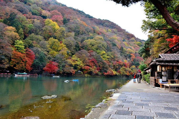 Fall Beauty Autumn Colors Autumn Leaves Water Reflections Kyoto Arashiyama Travel Photography Nikon D7100 Eye4photography