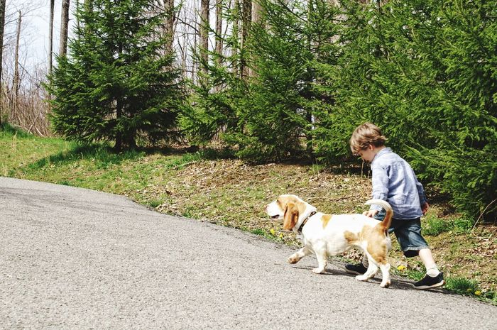 Dog Pets One Animal Full Length Boy And Dog Domestic Animals One Person Outdoors Casual Clothing Day Tree Walking Blond Hair Road Leisure Activity