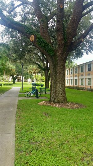 Pretty campus sights College College Campus Green Color Tree Sunlight Outdoors Tree Trunk Day Beauty In Nature Grass Saint Leo Univeristy