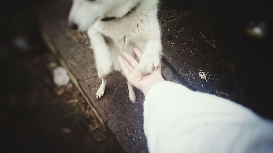 Dog собака собака друг человека лапа друг Frends