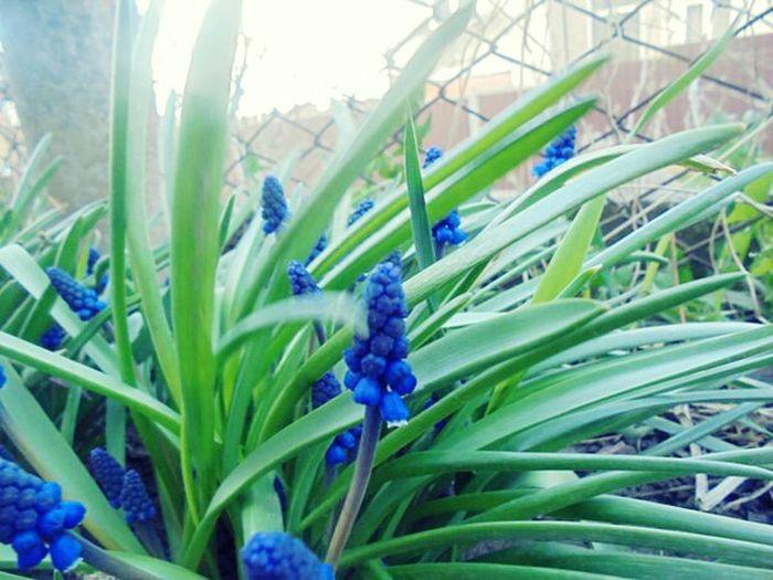 цветы🌸🌼🌻💐🌾🌿 Весна💐🌷🌿 Nature Крупный план Flower Head Day