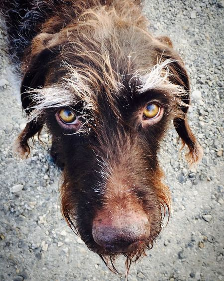 Close-up portrait of wet brown dog
