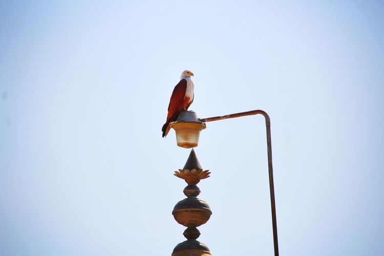 Eagle sitting on the temple tower